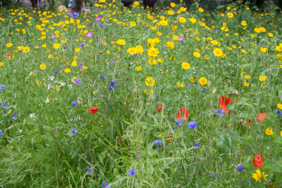 Wildflower Meadows Simply Lovely Janetbligh