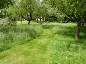 Areas of long grass can be an attractive garden feature