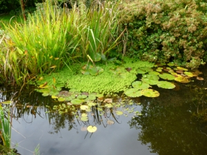 Ponds are a really valuable way to attract wildlife into any garden