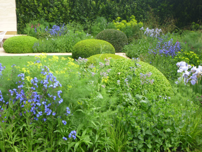 Clipped box domes contrast with cool herbaceous planting