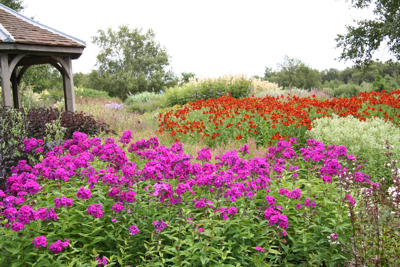 Helenium 'Rubinzwerg'.  A very colourful combination!