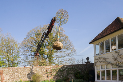 Craning in the trees