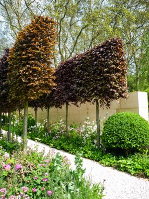 Pleaching Janet Bligh Garden Design