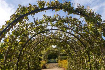 fruit arch