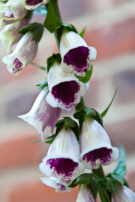 Digitalis AS